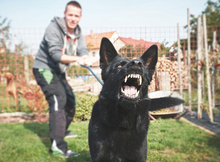 work-injury-dog-attack2.jpg